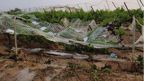 Alhama pide ayudas por daños en la agricultura tras las últimas lluvias