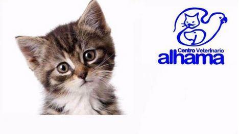 El Centro Veterinario Alhama te hace un descuento por esterilizar a tu gato