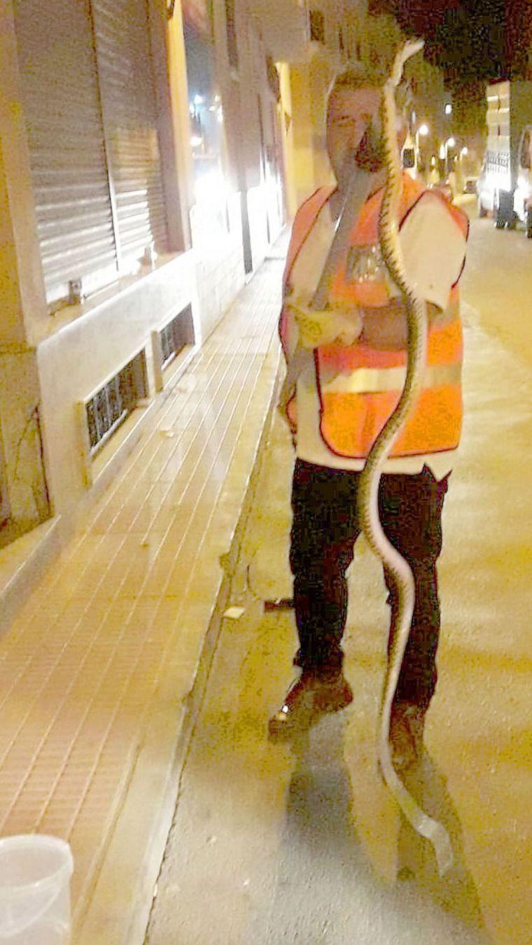 Protección Civil recupera una serpiente 'perdida' en Totana