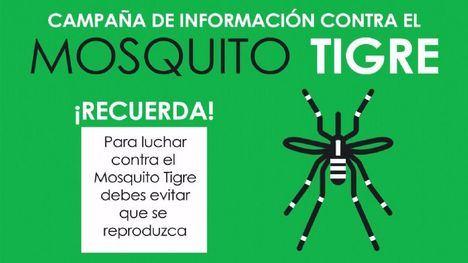 VÍDEO Vuelve el calor, vuelve el mosquito tigre