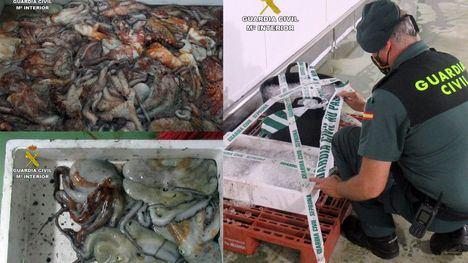 FOT. Intervienen 35 kg. de pulpo de pesca furtiva en Mazarrón