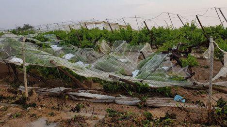La Consejería rechaza la ayuda a agricultores afectados por las lluvias