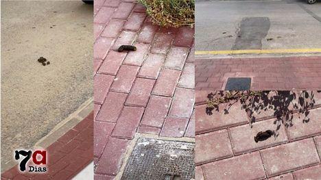 FOTOS Los 'regalos' caninos pueblan la calle Aljucer