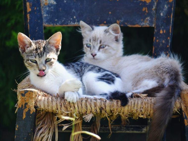 De gatos y hombres (II)