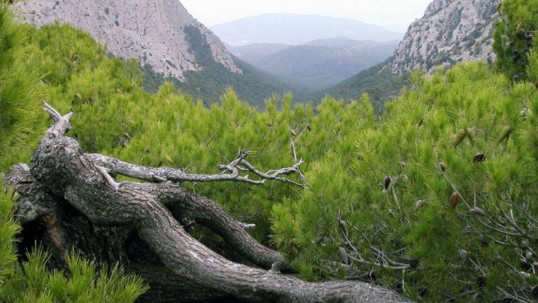 Trabajos selvícolas en S. Espuña para mejorar la biodiversidad forestal