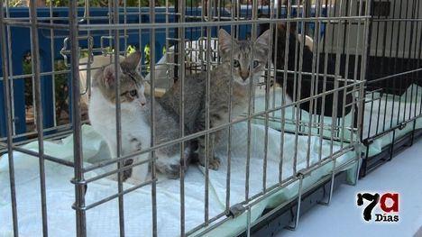 VÍDEO La pandemia ha traído más abandono... para los gatos