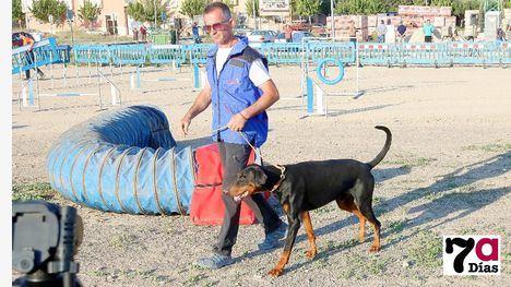 VÍDEO Adiestradores y perros exhiben su nivel de compenetración
