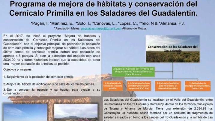 Meles lleva a la UMU su plan de conservación del cernícalo primilla