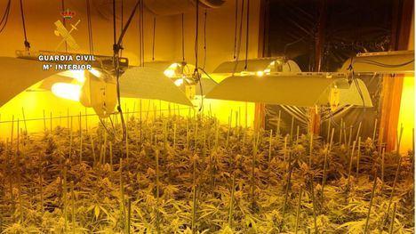 Condenados por plantar marihuana 6 miembros de una asociación legal