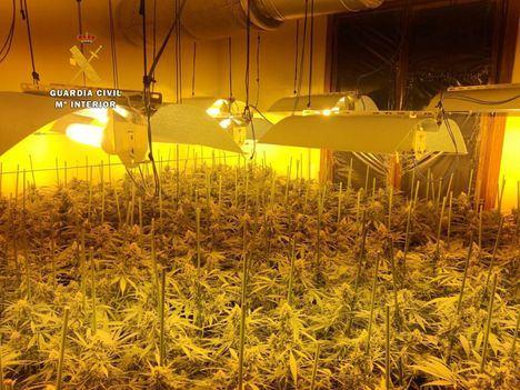 Plantación ilegal de marihuana descubierta por la Guardia Civil