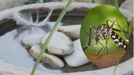Meles trae a uno de los mayores expertos en mosquitos tigre