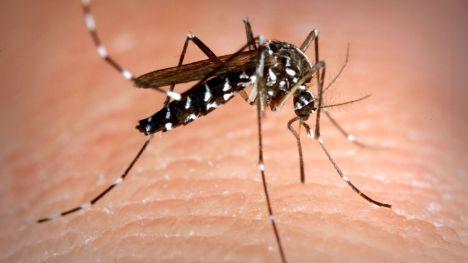 Otros dos casos de dengue en la Región vinculados a los anteriores