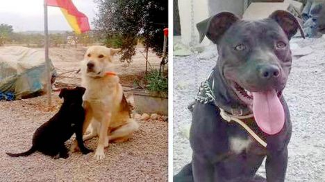 La Policía Local de Librilla informa del robo de dos perros