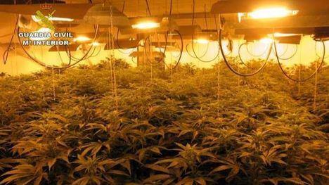 Detenido con armas, munición, 82 plantas de marihuana...