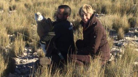 Un buitre, liberado en Sierra Espuña tras su recuperación