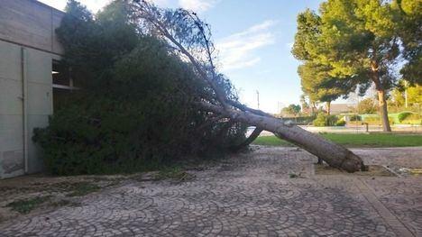 El fuerte viento provoca varias incidencias en el arbolado urbano