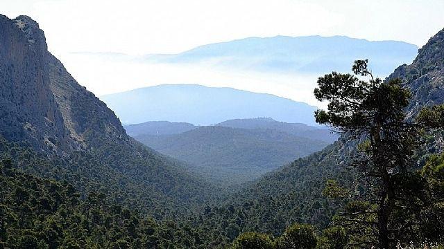 Cierran por nidificación del águila real varias zonas de Sierra Espuña