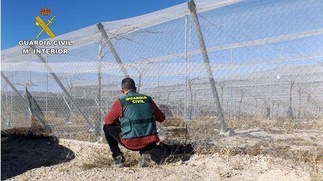 Desmantelan un grupo organizado que robaba en campos de Alhama
