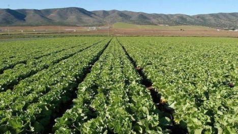 Ayudas destinadas a la inversión en explotaciones agrarias