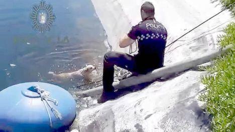 VÍDEO La Policía Local rescata a un perro caído a una balsa