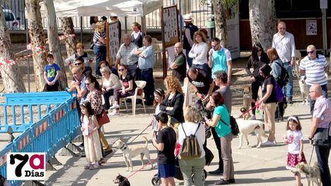 FOTOS Peludines celebra su primera Feria de las Adopciones