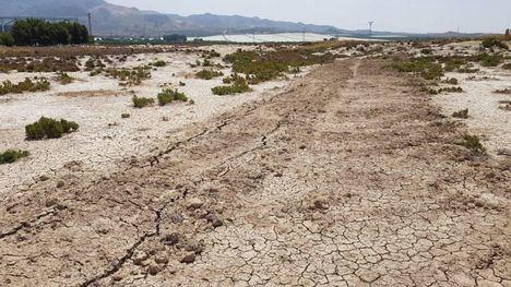Denuncian destrucción de flora protegida en los Saladares en Alhama