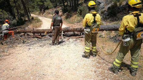 Despejan los caminos de Sierra Espuña de pinos caídos