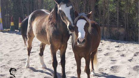 La Fundación Cavalli lamenta la muerte de uno de sus ponys, Pixie