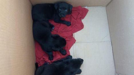 Abandonan a tres cachorros en una veterinaria de Alhama