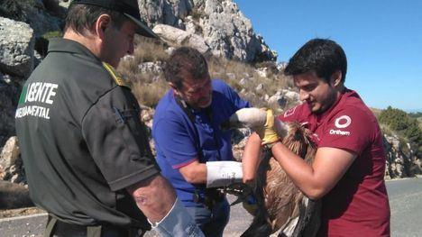 El director general del Medio Natural, Fulgencio Perona (c), durante la liberación del ejemplar de buitre leonado.