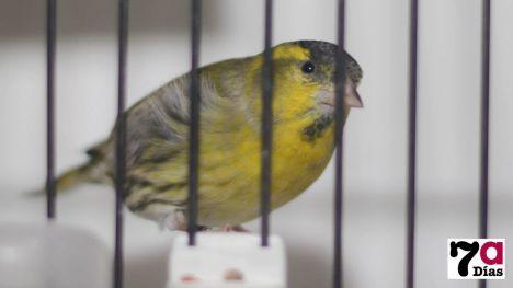 Los escolares de Alhama visitarán la Exposición Ornitológica