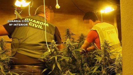 V/F Dos detenidos a cargo de una plantación de marihuana en Librilla
