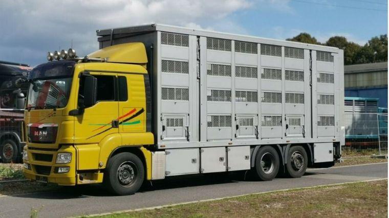 Primer curso del SEF de buenas prácticas en transporte de ganado