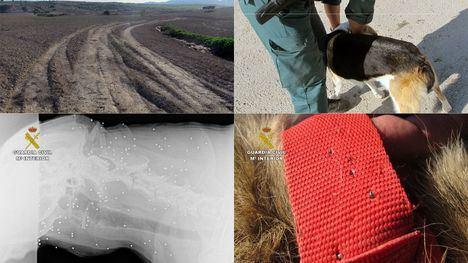 FOTOS Investigan a dos cazadores por disparar a 3 perros en Mazarrón