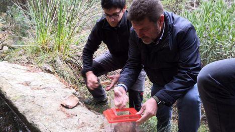 Liberan 15 ejemplares de sapo partero bético en Sierra Espuña