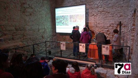VÍDEO La población del arruí en Sierra Espuña tiende a la baja