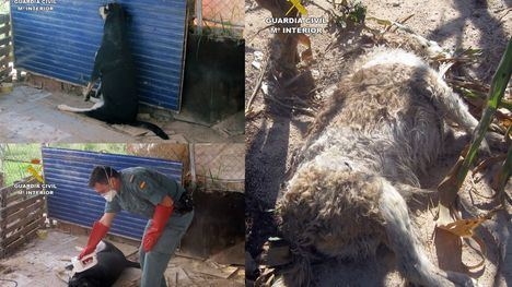 Detenido el supuesto autor de matar a sus perros en Librilla