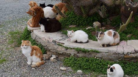 Últimos días para apuntarse al curso de Colonias Felinas