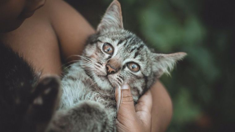 ¿Sabes qué beneficios tiene esterilizar a tu gato?