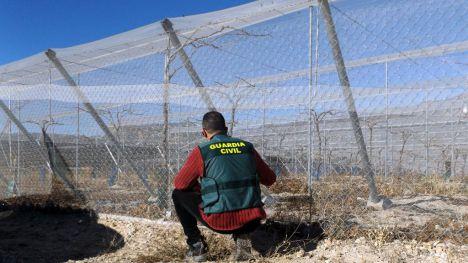 Tres detenidos por el hurto de uva en una finca de Totana