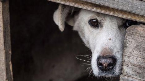 Totana regulará el uso de pirotecnia que daña a población y mascotas