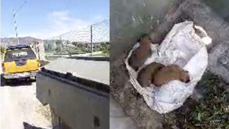 VÍDEO Abandonan cinco cachorros en un contenedor en Totana