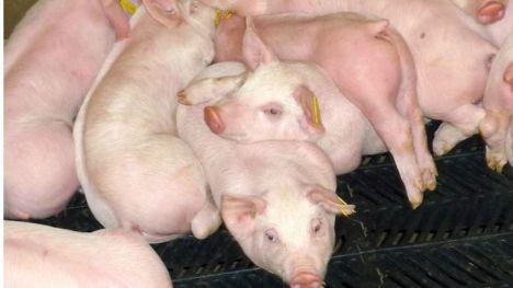 La Región pide que sean prioritarias las ayudas a ganadería y agricultura