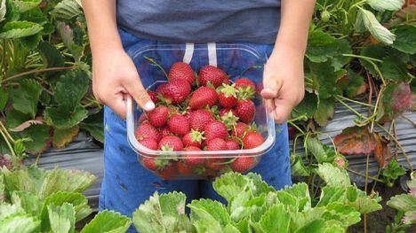Medidas agrarias para garantizar el empleo y el abastecimiento