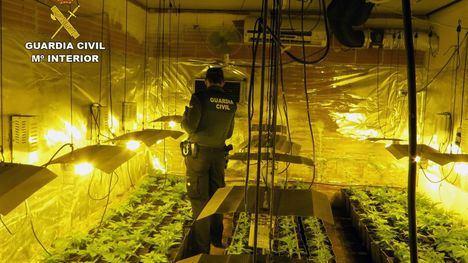 V/F Desmantelan en Totana un invernadero 'indoor' de marihuana