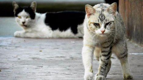Bienestar Animal retoma los trámites para el nuevo CES