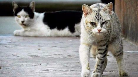 VÍDEO Alerta tras detectar veneno cerca de colonias felinas