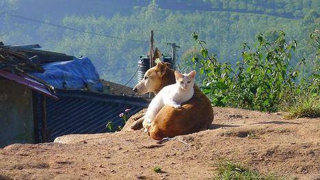 VÍDEO Hora de vacunar y microchipar a perros, gatos y hurones
