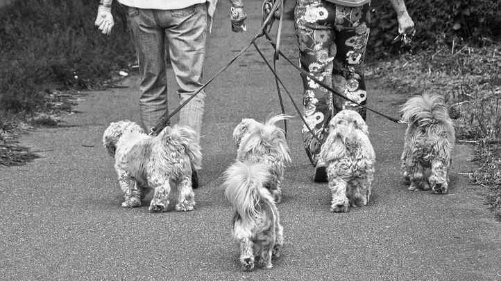 Alcantarilla obligará a los dueños de mascotas a limpiar los orines
