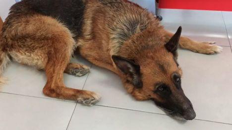 Salvan a un perro de morir ahogado en un pantano